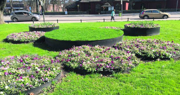 Karlskoga Blommar I Blatt Och Lila Mnytt Se